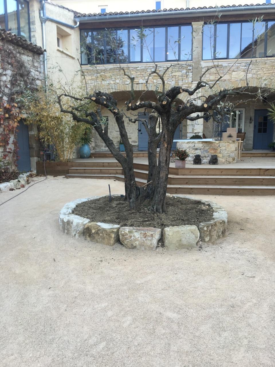 Plantation d\'un olivier à Aubussargues - Durandeux Travaux Publics